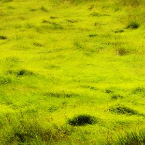 Picture of a boardwalk surrounded by grass.